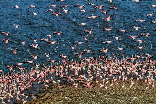 Lake Bogoria National Park「Aerial view of flamingo mass」:スマホ壁紙(7)