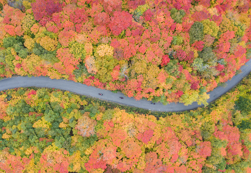 Motorcycle「Aerial View of road leading trough beautiful colorful autumn forest in sunny fall」:スマホ壁紙(5)