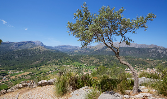 Built Structure「Aerial view of Pollenca and mountains beyond from hill top monastery, Mallorca」:スマホ壁紙(4)