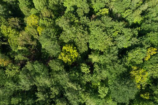 Ecosystem「Aerial view of forest in early springtime. Mecklenburg-Vorpommern, Mecklenburg Western Pomerania, Germany, Europe.」:スマホ壁紙(8)
