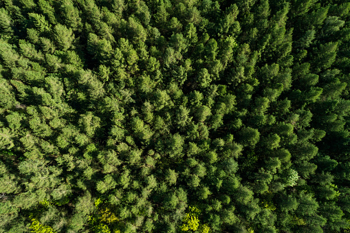 Drone Point of View「Aerial view of forest in early springtime. Mecklenburg-Vorpommern, Mecklenburg Western Pomerania, Germany, Europe.」:スマホ壁紙(0)