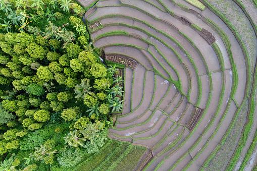バリ島「Aerial view of rice fields, Bali, Indonesia」:スマホ壁紙(13)