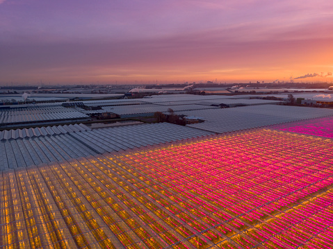 Planting「aerial view of a modern agricultural greenhouse in the Netherlands」:スマホ壁紙(16)