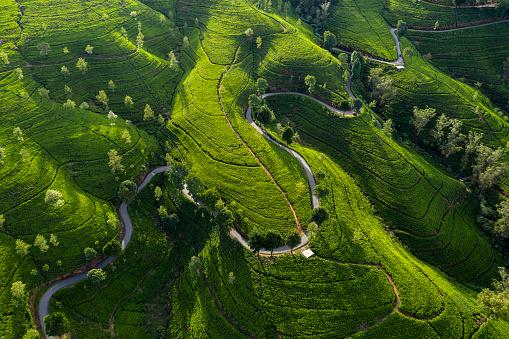 Indian Ocean「Aerial View of a Road Winding through the Edinburgh Tea Estate」:スマホ壁紙(6)