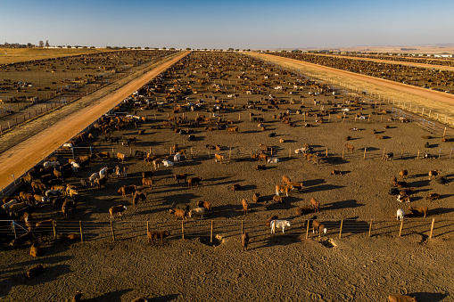 Slaughterhouse「Aerial view of a large cattle feedlot」:スマホ壁紙(15)