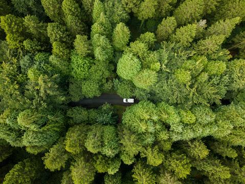 飾りつけ「ロスコモン アイルランドの経路を介して駆動白いバンで松林の航空写真」:スマホ壁紙(6)