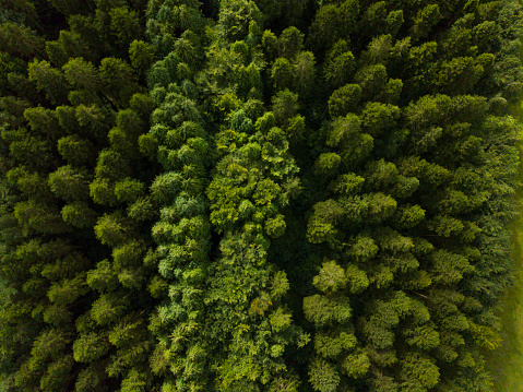 飾りつけ「松林、ロスコモン アイルランドの空撮」:スマホ壁紙(5)