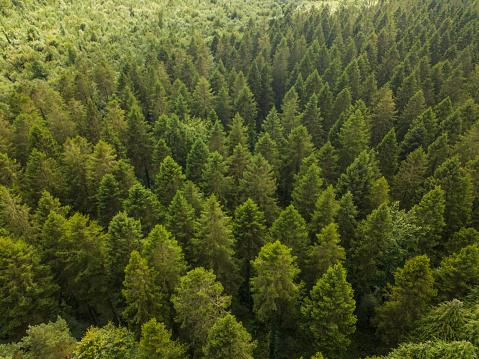 飾りつけ「松林、ロスコモン アイルランドの空撮」:スマホ壁紙(9)