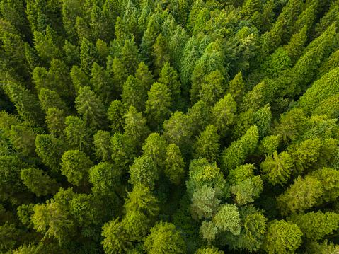 飾りつけ「松林、ロスコモン アイルランドの空撮」:スマホ壁紙(11)