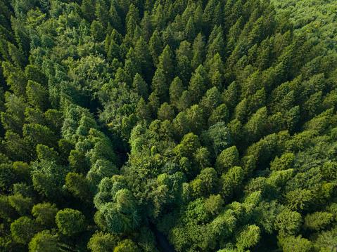 飾りつけ「松林、ロスコモン アイルランドの空撮」:スマホ壁紙(8)