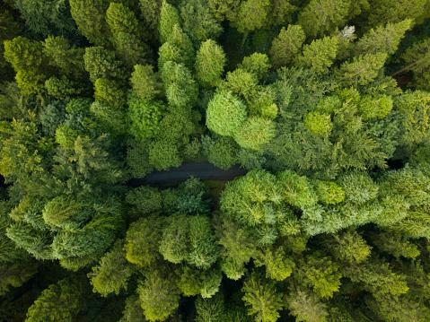 飾りつけ「松林、ロスコモン アイルランドの空撮」:スマホ壁紙(13)