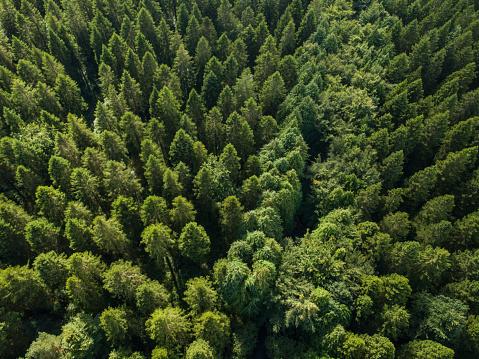 飾りつけ「松林、ロスコモン アイルランドの空撮」:スマホ壁紙(7)