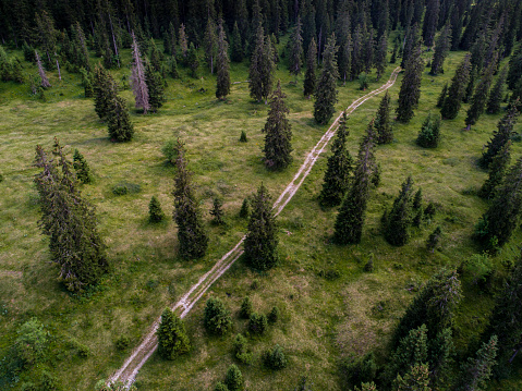 Vaud Canton「Aerial view of path among forest of spruces (Picea Abies) in summer, Le Chenit, Vaud, Switzerland」:スマホ壁紙(1)