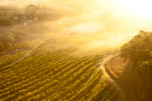 Valley「Aerial view of beautiful vineyards in Napa Valley, California」:スマホ壁紙(10)