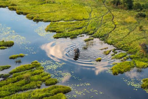 River「Aerial view of elephant, Okavango Delta, Botswana」:スマホ壁紙(6)