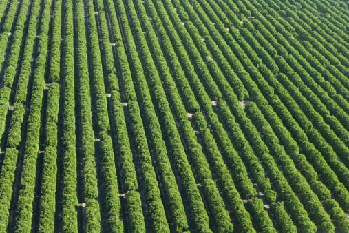 Grove「Aerial view of farmland」:スマホ壁紙(17)