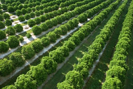 Grove「Aerial view of farmland」:スマホ壁紙(3)