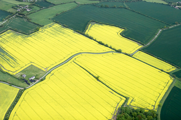 High Angle View「Aerial view north east of rape fields, fields in Essex near Saffron Walden, UK」:写真・画像(0)[壁紙.com]