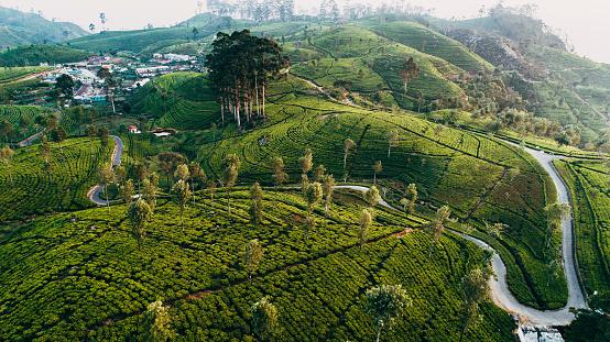 Sri Lanka「Aerial view of tea plantation in Sri Lanka」:スマホ壁紙(3)