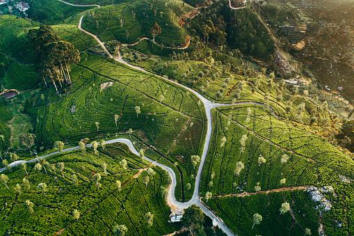 Sri Lanka「Aerial view of tea plantation in Sri Lanka」:スマホ壁紙(2)
