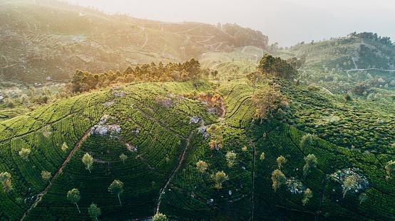 Sri Lanka「Aerial view of tea plantation in Sri Lanka」:スマホ壁紙(18)