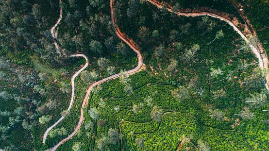 Sri Lanka「Aerial view of tea plantation in Sri Lanka」:スマホ壁紙(10)