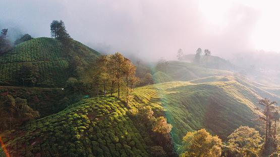 Sri Lanka「Aerial view of tea plantations at sunrise」:スマホ壁紙(14)