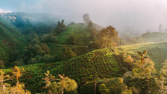 Sri Lanka「Aerial view of tea plantations at sunrise」:スマホ壁紙(16)