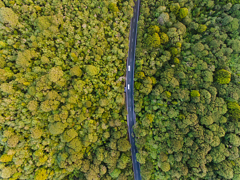 Long「Aerial view of long road cutting through forest.」:スマホ壁紙(6)