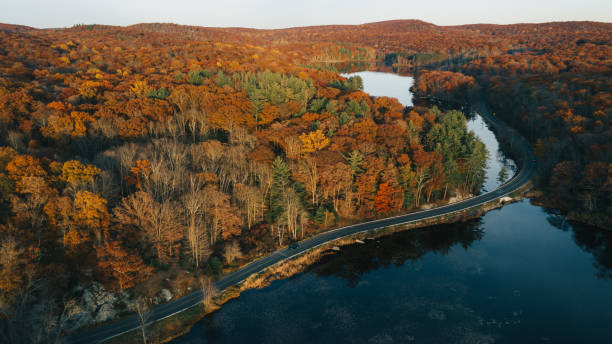 Aerial view of autumn leaves in New York:スマホ壁紙(壁紙.com)