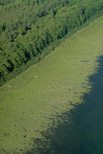 The Nature Conservancy「Aerial View of Forest Wetlands Along Washington Coast」:スマホ壁紙(6)