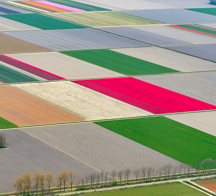 Netherlands「Aerial view on fields of tulip flowers growing in spring in Holland」:スマホ壁紙(17)