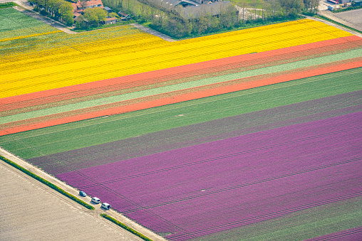 Netherlands「Aerial view on fields of tulip flowers growing in spring in Holland」:スマホ壁紙(13)