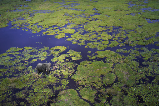 Okavango Delta「Aerial view of elephant walking in remote river」:スマホ壁紙(6)