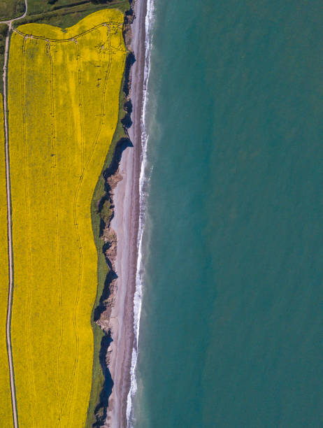 Aerial view of rapeseed fields by the ocean:スマホ壁紙(壁紙.com)