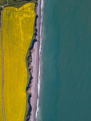 Canola「Aerial view of rapeseed fields by the ocean」:スマホ壁紙(6)