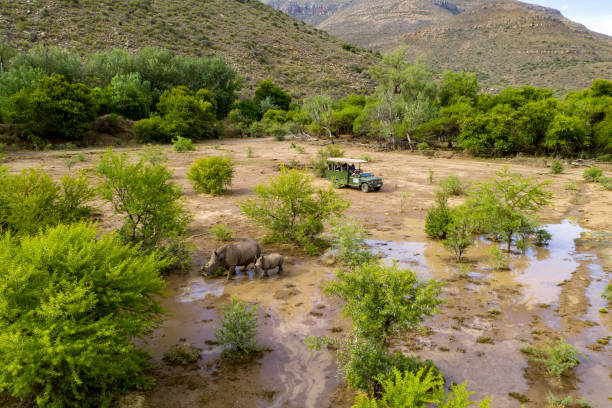 4K aerial view of tourists in a safari 4x4 game drive vehicle watching white rhinos grazing in a nature reserve:スマホ壁紙(壁紙.com)