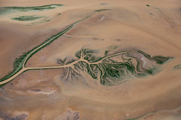 Aerial view of Lesser Flamingos feeding on shallow water river delta:スマホ壁紙(壁紙.com)
