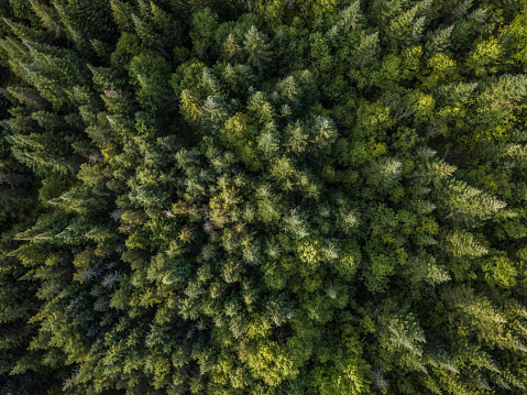 Wildlife Conservation「Aerial View of Boreal Nature Forest in Summer」:スマホ壁紙(9)