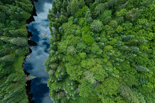 Helicopter「Aerial View of Boreal Nature Forest and River in Summer」:スマホ壁紙(14)