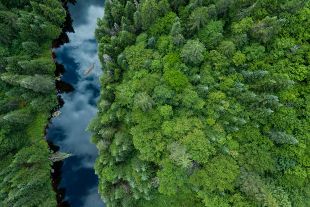 Aerial View of Boreal Nature Forest and River in Summer:スマホ壁紙(壁紙.com)