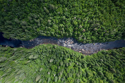 Wildlife Conservation「Aerial View of Boreal Nature Forest and River in Summer」:スマホ壁紙(13)
