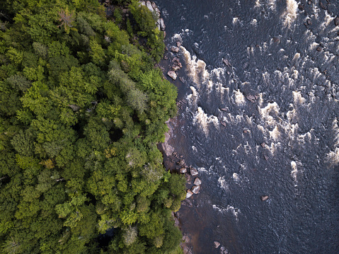 Animal Wildlife「Aerial View of Boreal Nature Forest and River in Summer」:スマホ壁紙(18)