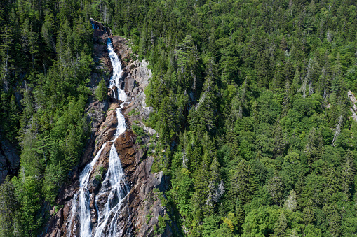Boreal Forest「Aerial View of Boreal Nature Forest and Waterfall in Summer」:スマホ壁紙(5)