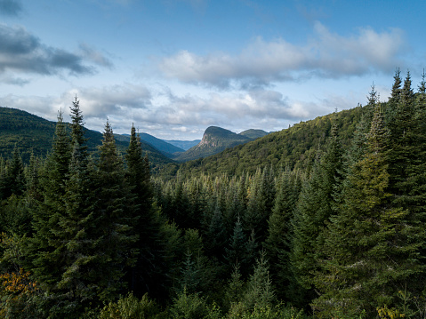Tree Hugging「Aerial View of Boreal Nature Forest and Mountain in Summer」:スマホ壁紙(19)