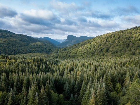 Boreal Forest「Aerial View of Boreal Nature Forest and Mountain in Summer」:スマホ壁紙(8)