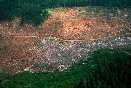 Deforestation「Aerial View of Logged Forest」:スマホ壁紙(18)