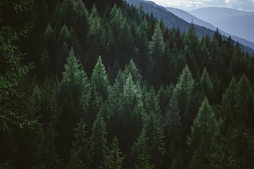 樹木「山の林の緑夏木立の航空写真」:スマホ壁紙(5)