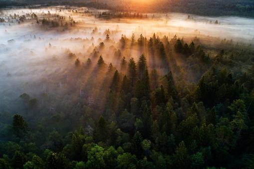 Ecosystem「Aerial view of fog in the forest at sunrise, Pupplinger Au near Wolfratshausen.」:スマホ壁紙(1)