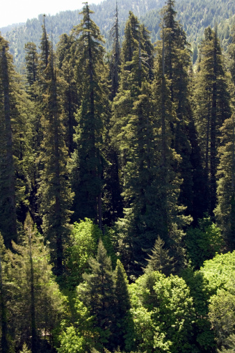 Humboldt Redwoods State Park「Aerial view of California woods」:スマホ壁紙(19)